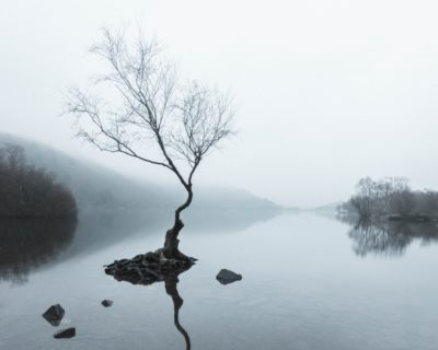 A crooked tree stands alone in a lake before sunrise on a misty morning.