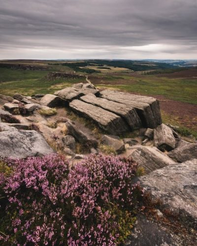 The purple heather at Stanage Edge wraps itself around a unique rock formation. The purple moorlands stretch into the distance, before giving way to grey clouds swirling above.