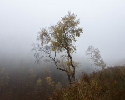 Two trees adorn autumn colours, and stand in dense fog. The larger one in the background is leaning over and pointing to the foreground tree. A valley drops off to the left with hints of golden leaves poking through the fog.