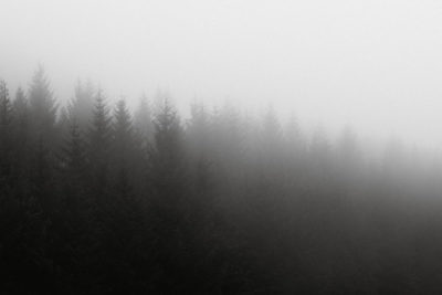 A monochrome image of a row of pine trees falling away into fog.