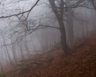 Two mature trees stand dominant in a misty, moody forest. Their branches are bare, and one branch off each has fallen on to a carpet of fallen Autumn leaves.