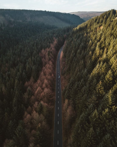 An aerial view of a road bending through a forest as the last of the sunlight catches the tips of the pine trees.