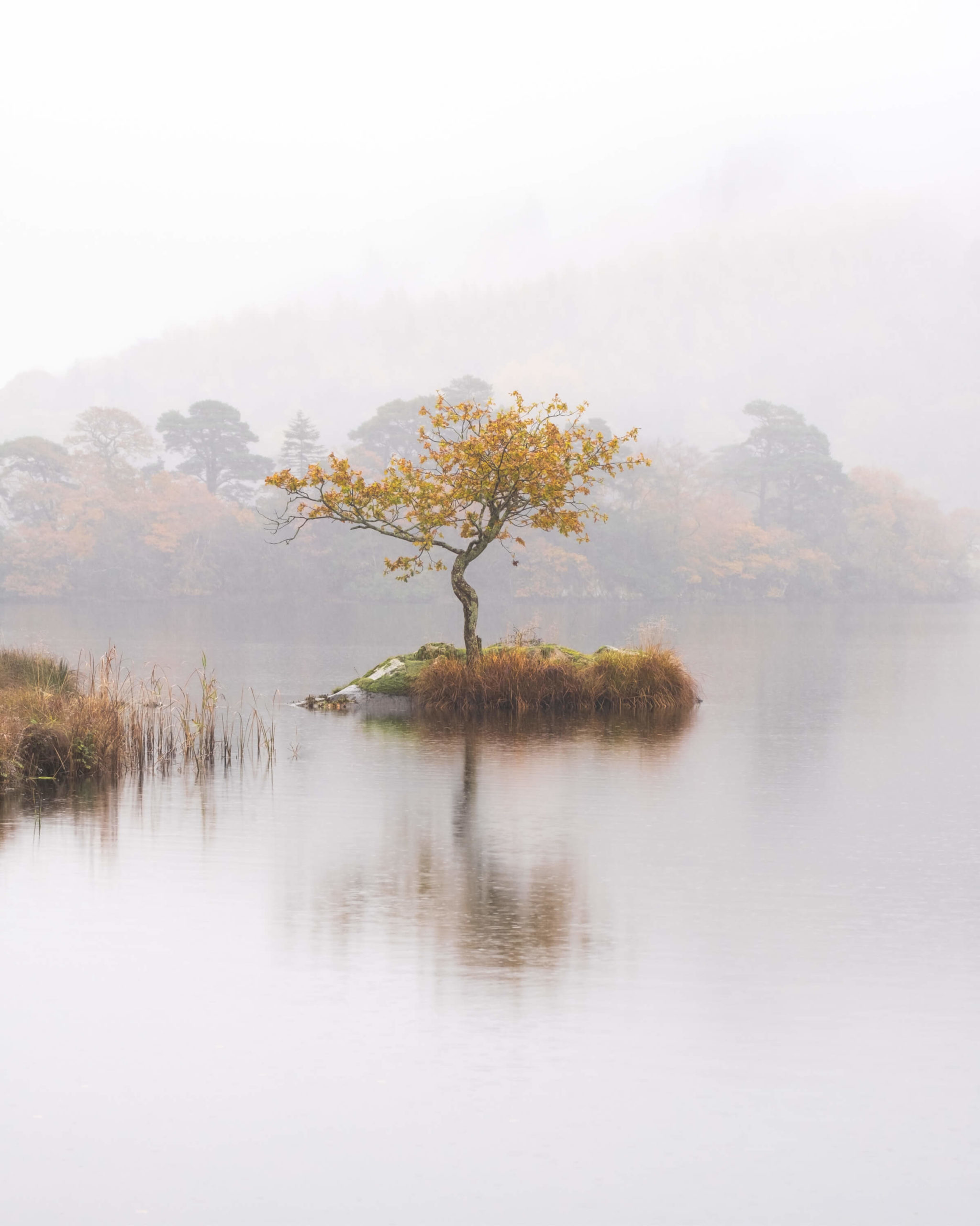 Mist and rain beats down over a clear lake's surface. A single, lone autumnal tree sits on a small island in the centre of the scene.