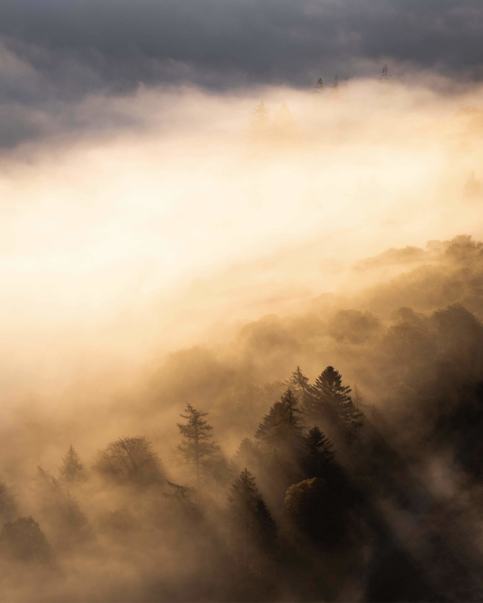 From the summit of a mountain, the morning sun ignites a whole valley and turns the low cloud golden and bright. Light streams through the treeline and creates dramatic shapes and lines.